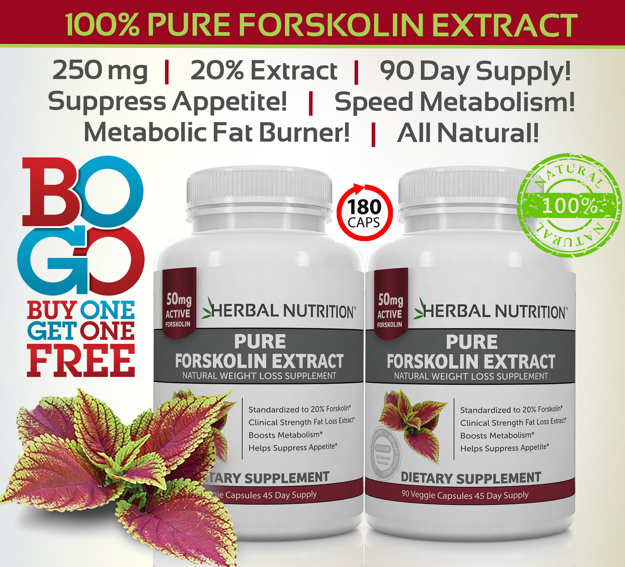 Forskolin Extract Two Bottles Graphic
